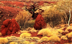 IMG_3675 Karijini Termite Mounds Smr