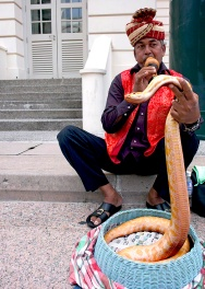 Snake Charmer W