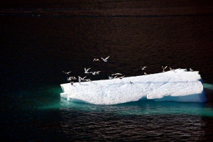 Birds on Floating Iceberg