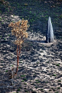 Termite Mound Ubirr Kakadu