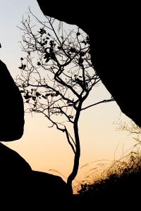 Tree Silhouette Ubirr
